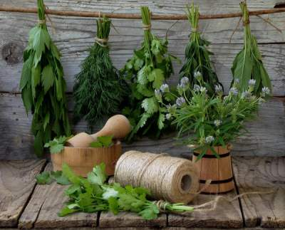 Эти травы помогут избавиться от токсинов