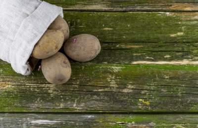 Врачи рассказали, безопасно ли есть «зеленую» картошку