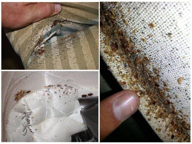 Постельные клопы — как предотвратить появления паразитов?